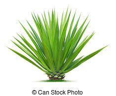 ornamental plant images and stock photos 113 286 ornamental plant