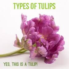 Identify Flowers - best 25 types of flowers ideas on pinterest peony popular
