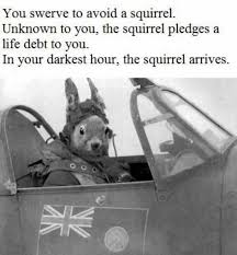 Swerve Memes - dopl3r com memes you swerve to avoid a squirrel unknown to