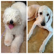 i u0027m pretty sure the groomer gave me back the wrong dog aww