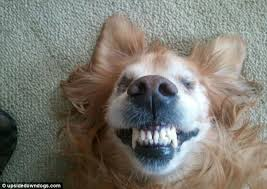 Frowning Dog Meme - turn that frown upside down daft dogs look like they re grinning