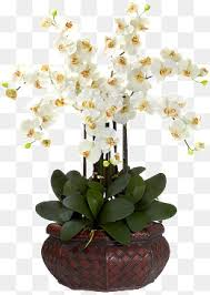 White Orchid Flower White Orchid Png Images Vectors And Psd Files Free Download On