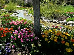high altitude gardening thanksgiving point tulip festival