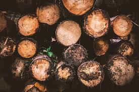 free photo wood log holzstapel logging free image on pixabay