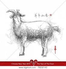 hairy goat images illustrations vectors hairy goat stock