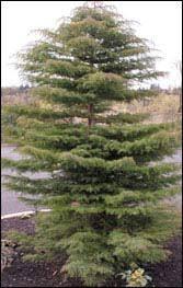 top ten most desirable trees disease resistant trees