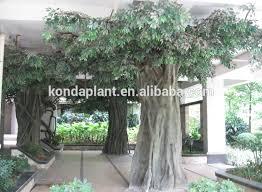 trees on sale rainforest islands ferry