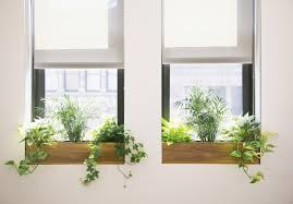 plants for office how to choose the best office plant for your work space