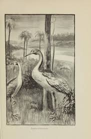 file a sketch of the natural history of australia page 111