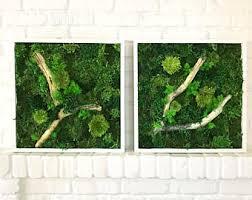 wall terrarium etsy