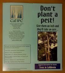 sacramento native plants cal ipc eucalyptus reassessment same result for different