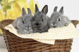 bunnies for easter fox10 rescue warns parents against buying real bunnies