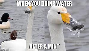 Meme Duck - frozen duck imgflip