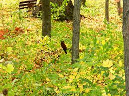 michigan fall foliage redhead decorate