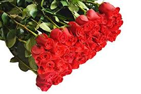Wholesale Fresh Flowers Amazon Com Farm2door Wholesale Roses 100 Stems Of Long Stemmed
