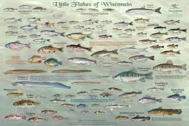 wisconsin u0027s fish u2013 all of them u2013 star in new poster series