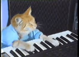 Cat Playing Piano Meme - keyboard cat gif find download on gifer