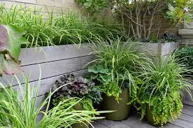 Small Urban Garden - small urban garden houzz