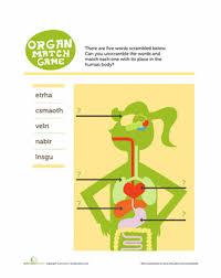 Human Anatomy Words Anatomy Abcs Human Body Vocabulary Education Com
