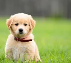 puppies adorable puppy pics u0026 expect