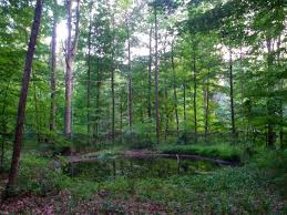 Indiana forest images Indiana woodland steward bats exploit dynamic forests jpg