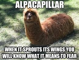 Fear Meme - fear the mighty alpacapillar meme by bigpuppylover2000 memedroid