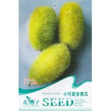 shop decorative cucumbers seed 30 seeds cucumis sativus