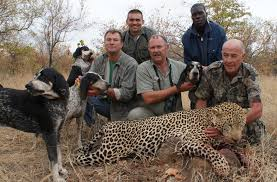 bluetick coonhound gascon leopard hunting in africa with blue tick hounds youtube