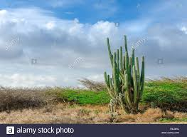 sonoran desert native plants dry and arid desert landscape with cactus and native plants in