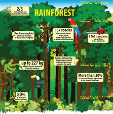 amazon rainforest native plants 6 ways brazil is saving the amazon conserve