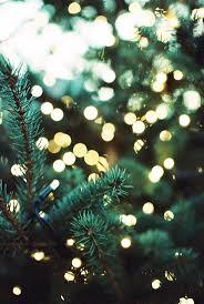pine trees u0026 lights winter feels pinterest winter pine