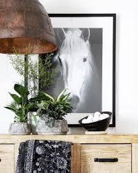 trending horse prints