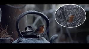 Waitrose Halloween Cake by Waitrose Christmas Advert Sees Robin Make Incredible Journey Home