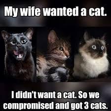 Cat Laptop Meme - coolest grumpy cat meets fice space yessss meow pinterest