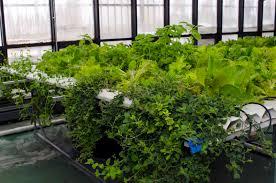 indoor hydroponic garden gardening ideas