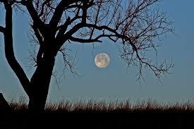 wolf moon tree seat conservation area photo dan bush photos at
