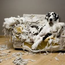 Great Dane Home Decor Buying Online Eco Friendly Pets Products Cool Pets Accessories