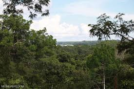 canopy amazon forest canopy with the amazon river in the background