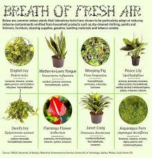 benefits of houseplants indoor plants that reduce airborne contaminants sheila s blog