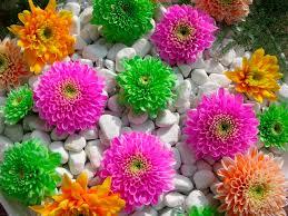flower garden designs betsy manning
