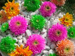 home flower garden designs u2013 home design and decorating
