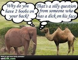 Camel Memes - elephant and camel meme by vikingfan100 memedroid