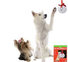 new product paw print ornament kit petmeds pet health