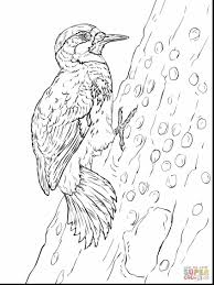 amazing toucan coloring pages printable with toucan coloring page