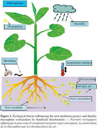 beneficial effect of the rhizosphere microbial community for plant