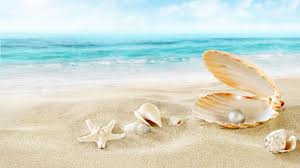 shell wallpaper perl tag wallpapers beach sea shells seashells sand perl wallpaper