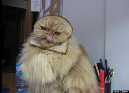 Cat Breading Meme - cats have had enough of cat breading meme internet and cat