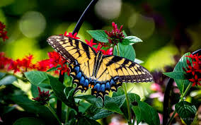 butterfly on flower amazing wallpaper nature and landscape