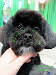 affenpinscher good bad pet grooming the good the bad u0026 the furry december 2010