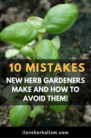 10 Vegetables U0026 Herbs You by There Are A Few Simple Mistakes That Many Herb Newbies Make And I